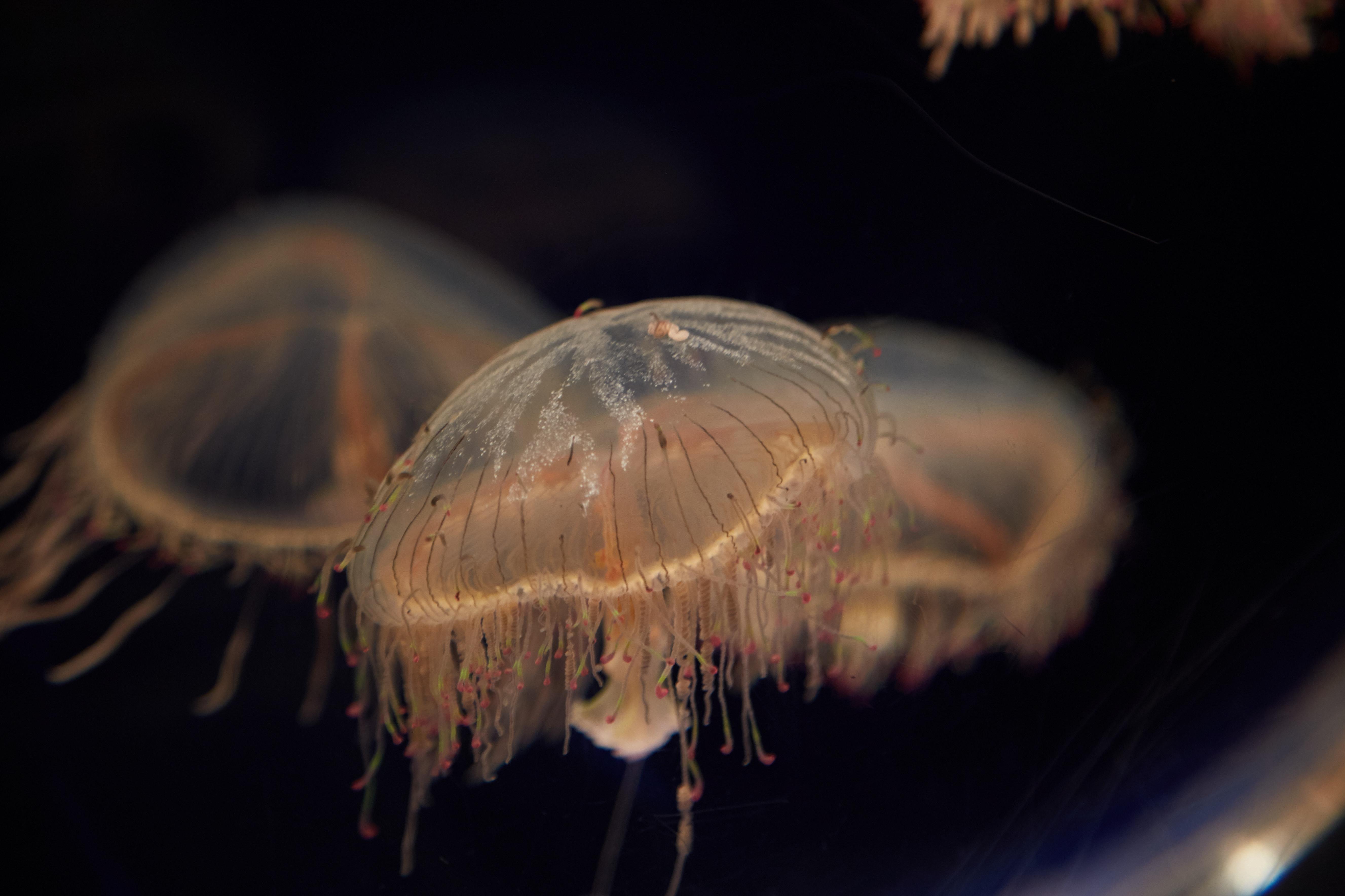 Haruki Murakami Jellyfish Ueno Zoo