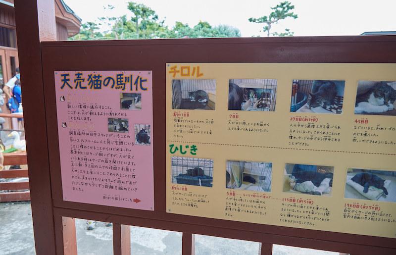 Murakami Zoo Cats