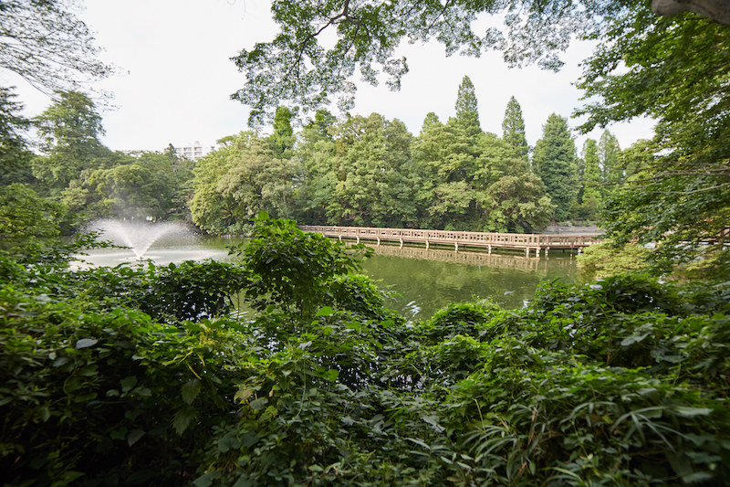 Inokashira Park Norwegian Wood